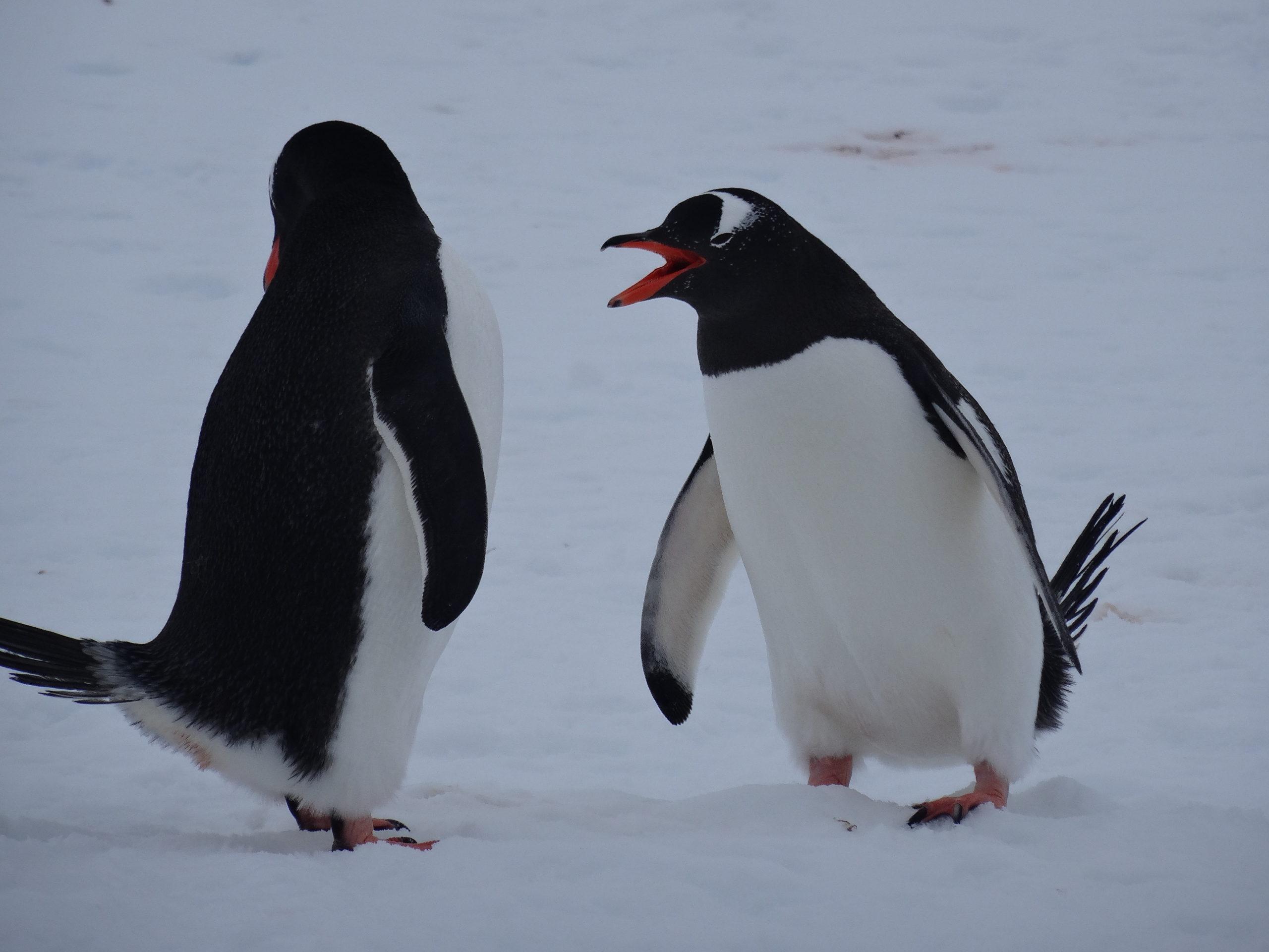 Heliski-Russia-Antarctique-3-scaled