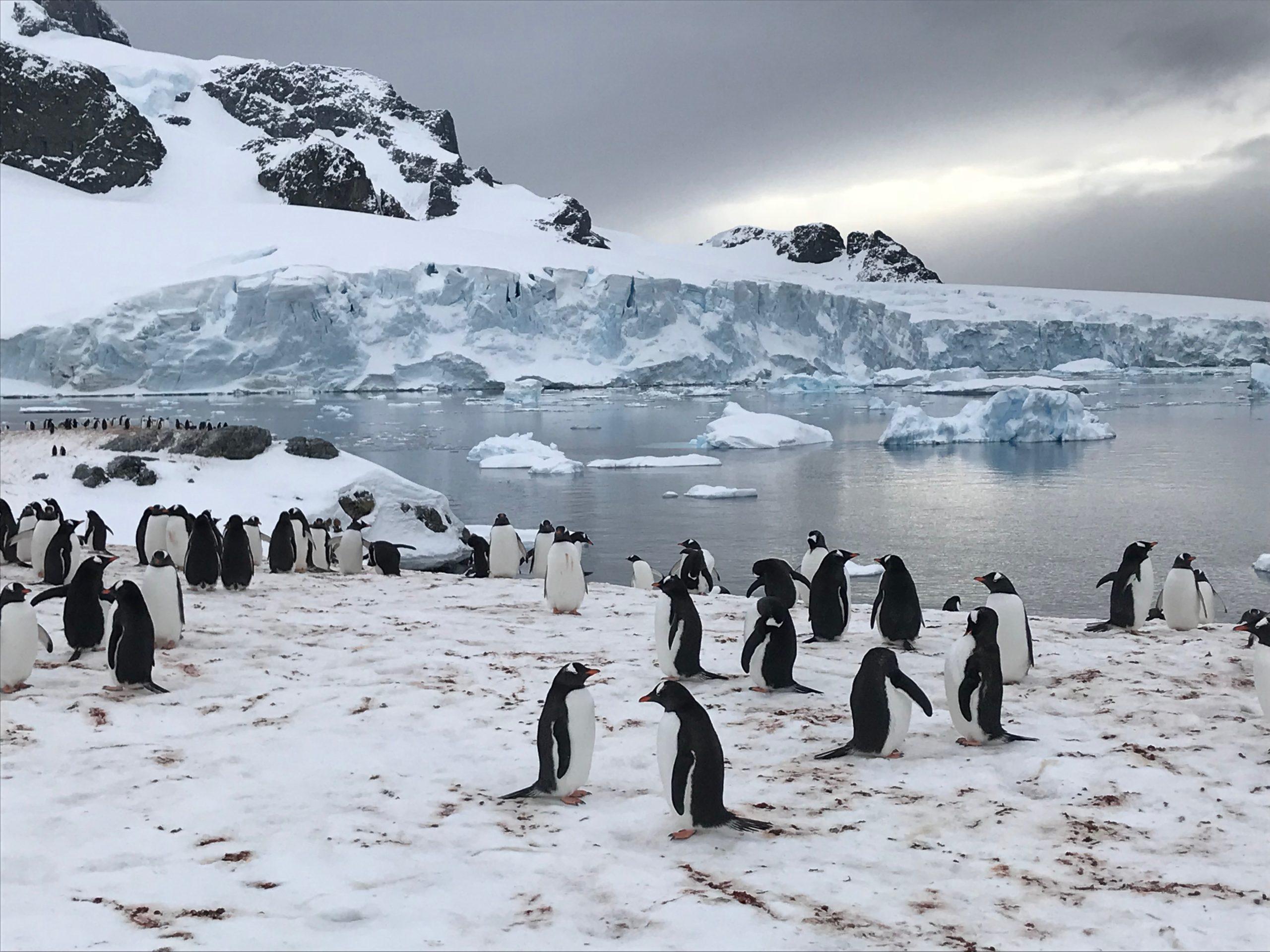 Heliski-Russia-Antarctique-4-scaled