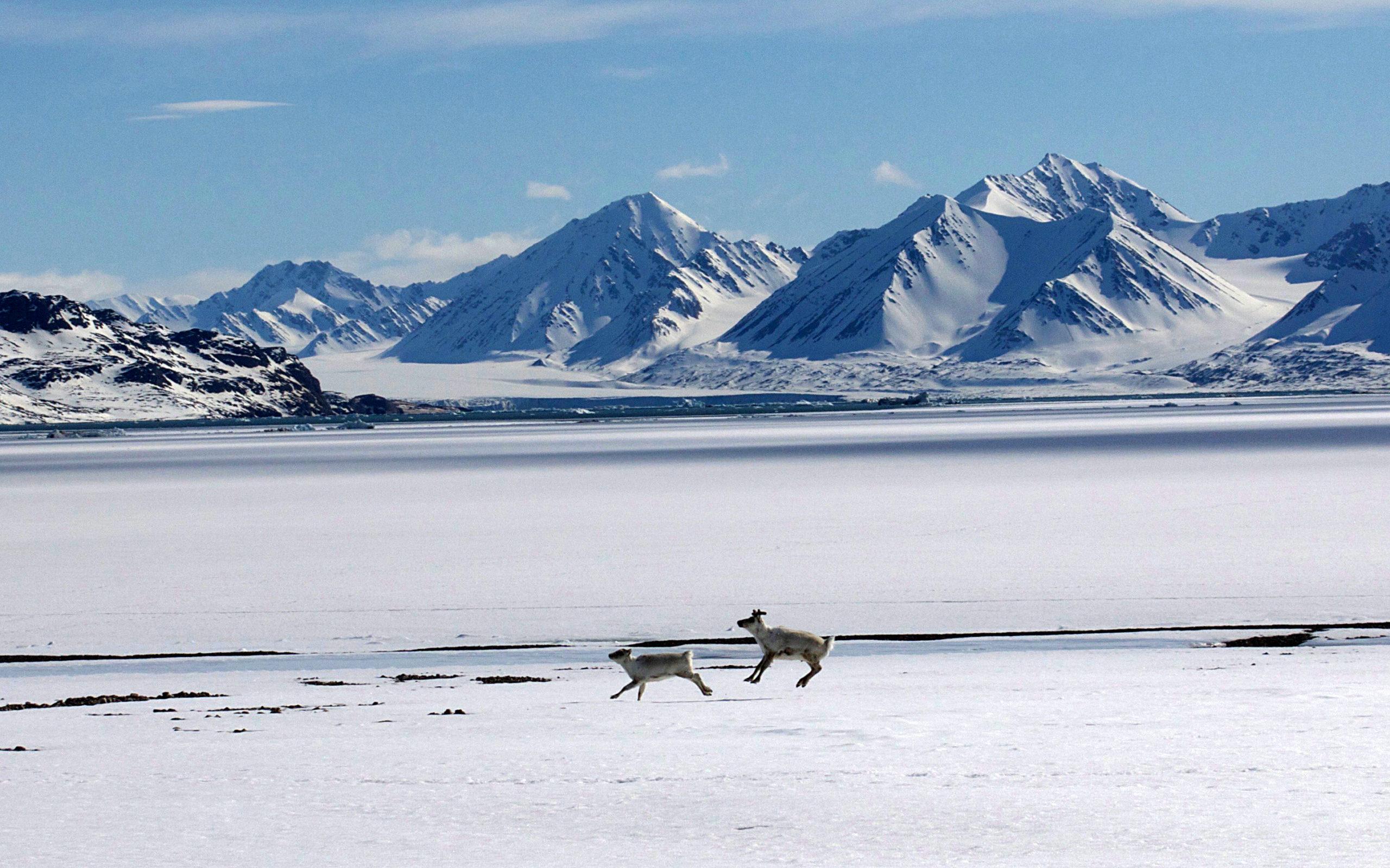 Heliski-Russia-Archipel-Svalbard-7-scaled